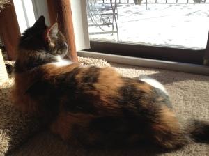 Watching her birdie friends.