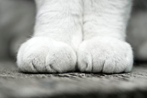 kitty_feet_by_aerten-d4q6tuw