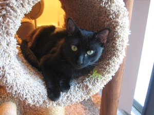 Grizzy in his cat tower