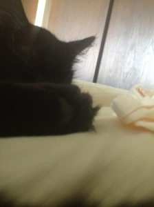Sophie's fuzzy foot.