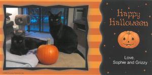 halloweenkitties