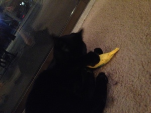 Those little black paws kill me.