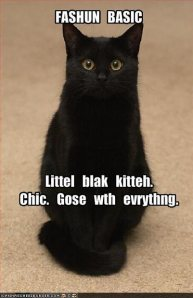 funny-pictures-a-little-black-cat-goes-with-everything