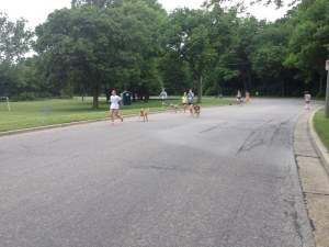 """During the run. The """"dog racers"""" started 15 minutes after us, so we got to see a bit of their run."""