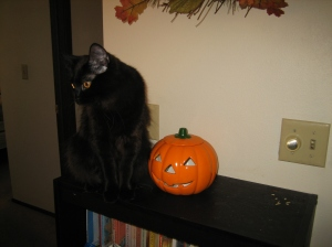 No we the see pumpkin's face, but Sophie sees something else.