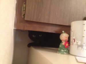 Grizzy on the fridge