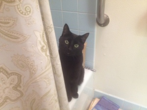 Grizzy watching me from the tub.