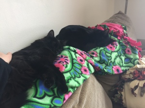 Sophie and Grizzy passed out on the pink blanket.
