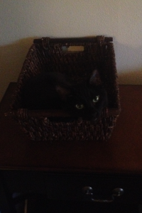 Grizzy in a basket.