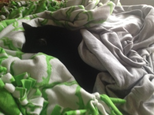 Grizzy snuggled up in blankets
