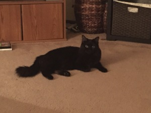 Sophie kitty posing.