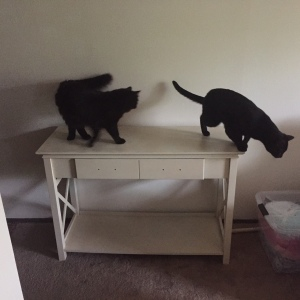 Two kitties on a table