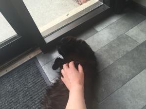 Sophie tummy in hallway