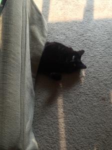 Sophie half under ottoman