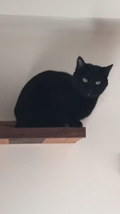 Grizzy on his cat ledge