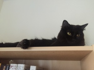 Sophie on the bookcase with toe floof
