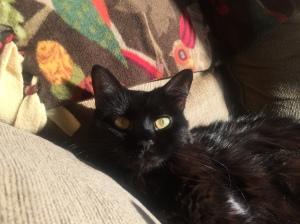 Sophie super sunny eyes