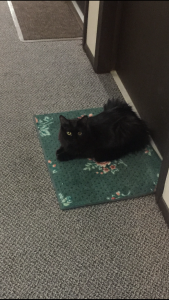 Sophie in the door mat
