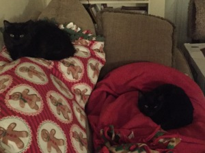 Sophie and Grizzy on Christmas blankets