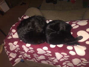 Sophie and G curled up on the paw print blanket