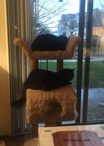 Double-decker kitties.