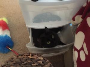 Sophie in the plastic bins