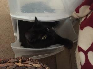 Sophie cat in the plastic bins 2