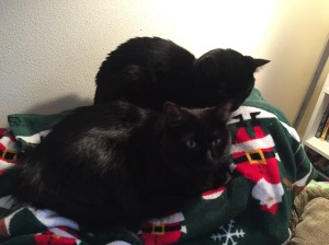 Sophie and Grizzy on Christmas blanket