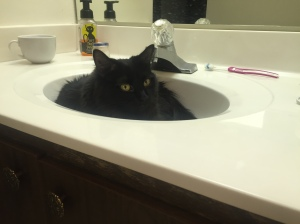 Sophie side-eyin' in a sink.
