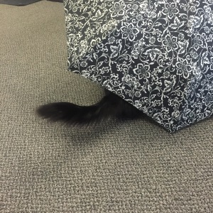 Sophiekitty hiding under umbrella