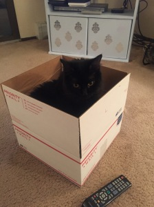 Sophie kitty in a box