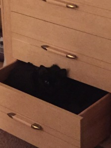 Sophie in a drawer