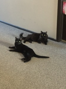 griz and sophiekitty Chillin' in the hallway