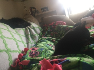 sophie, grizzykitty, and me on the couch with blankets