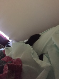 Sophie under the blankets