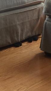 Sophie's feet peeking from under the ottoman