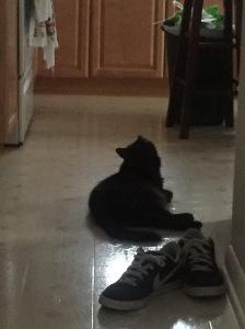 Sophie in kitchen 2
