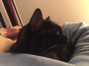 Sophiekitty snuggled up in my arm in bed