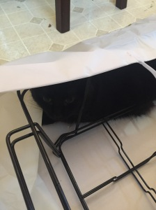 Sophie kitty snuggled up in Qdoba bag