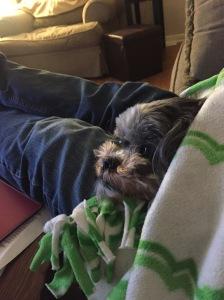Sammi puppy under the green and white fleece blanket 1