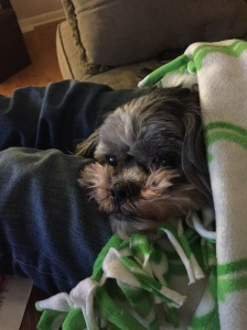 Sammi puppy under the green and white fleece blanket 3
