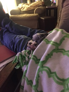 Sammi puppy under the green and white fleece blanket 2