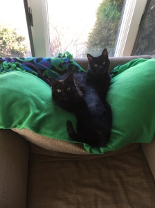 Sophie and Gcat snuggled up on the green blanket on the big chair