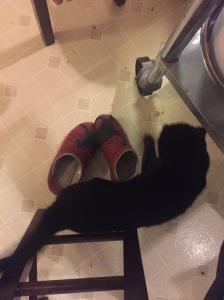 Grizzy kitty walking by my black cat slippers