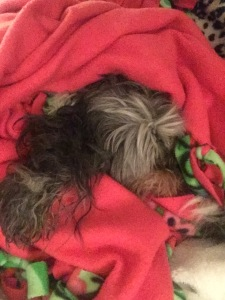 Sammi wrapped up in a fuchsia fleece blanket